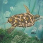 turtle_09